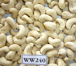 Fresh Cashew Nut (W210, W240, W320, W450,Lp, Sw)